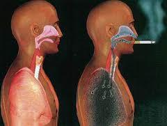 zigarren-rauchen-was-sind-die-gesundheitsrisiken